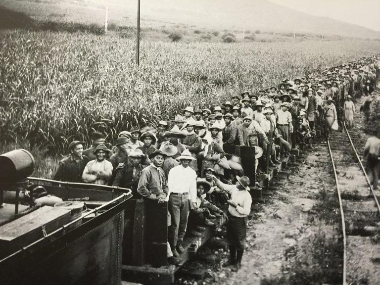 Filipińscy imigranci naplantacji trzciny cukrowej, Hawaje XX wiek