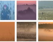 inspirujące profile na Instagramie las w nas magda bębenek piotr horzela w lesie puszcza knyszyńska #laswnas #wlesie #polskaporzyroda
