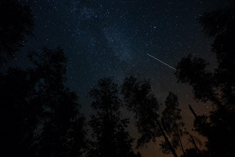 dzikie dzieci magda bębenek rok bliżej natury las wnas rozgwieżdżone niebo gwiazdy noc wlesie