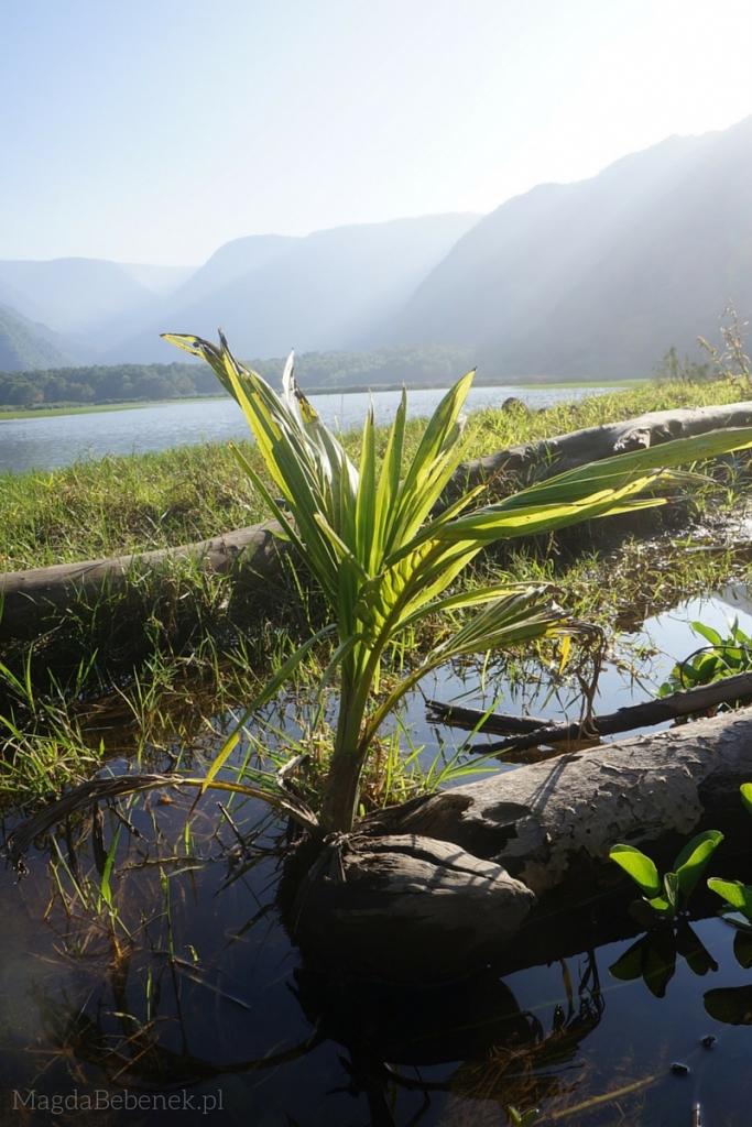 aloha aina dbanie osrodowisko magdabebenek.pl waipio valley big island hawaje