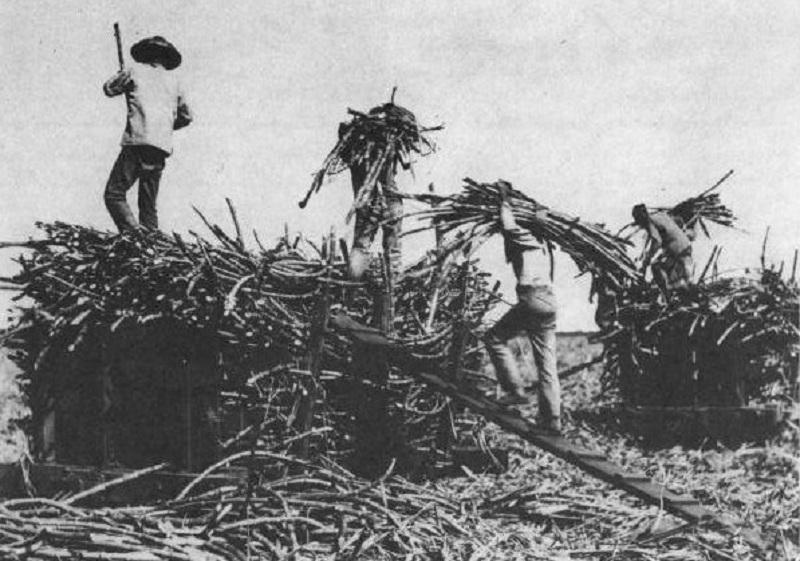 Chińscy imigranci naHawajach, XIX wiek
