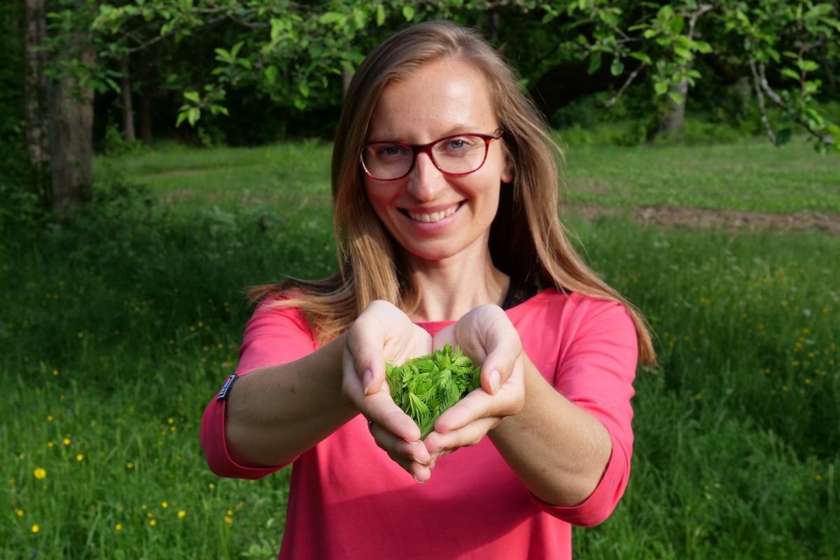 dżem świerkowy konfitura z pędów świerka ekologiczne życie smakowite drzewa