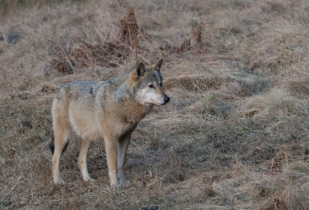 magda bębenek związki frazeologiczne zezwierzętami przysłowia przyroda wilk wlesie leśna kąpiel