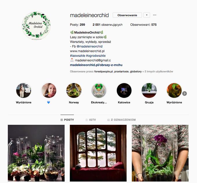 inspirujące profile nainstagramie las wnas magda bębenek madeleine orchid las wsłoiku